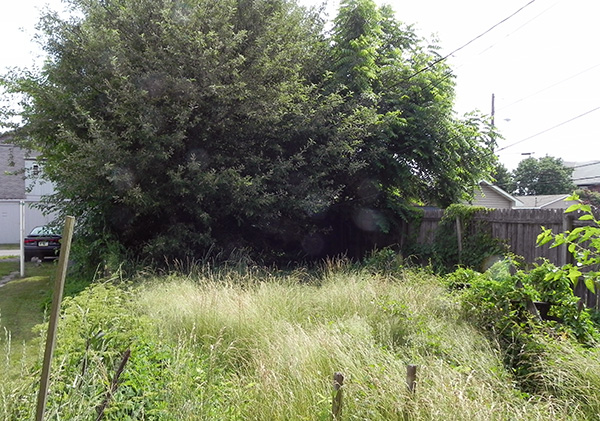 Overgrown Yard - Home to many Critters.
